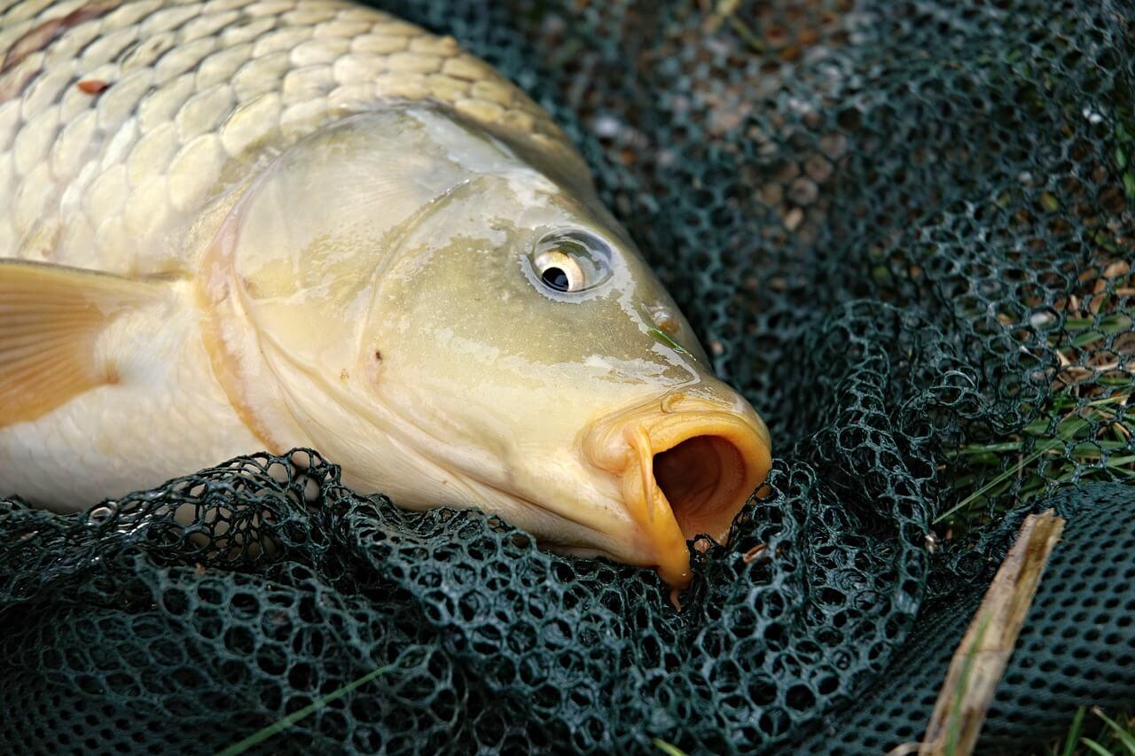 Tip#018: Jak správně podebrat rybu