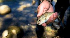 Ohrožené řeky v Bosně