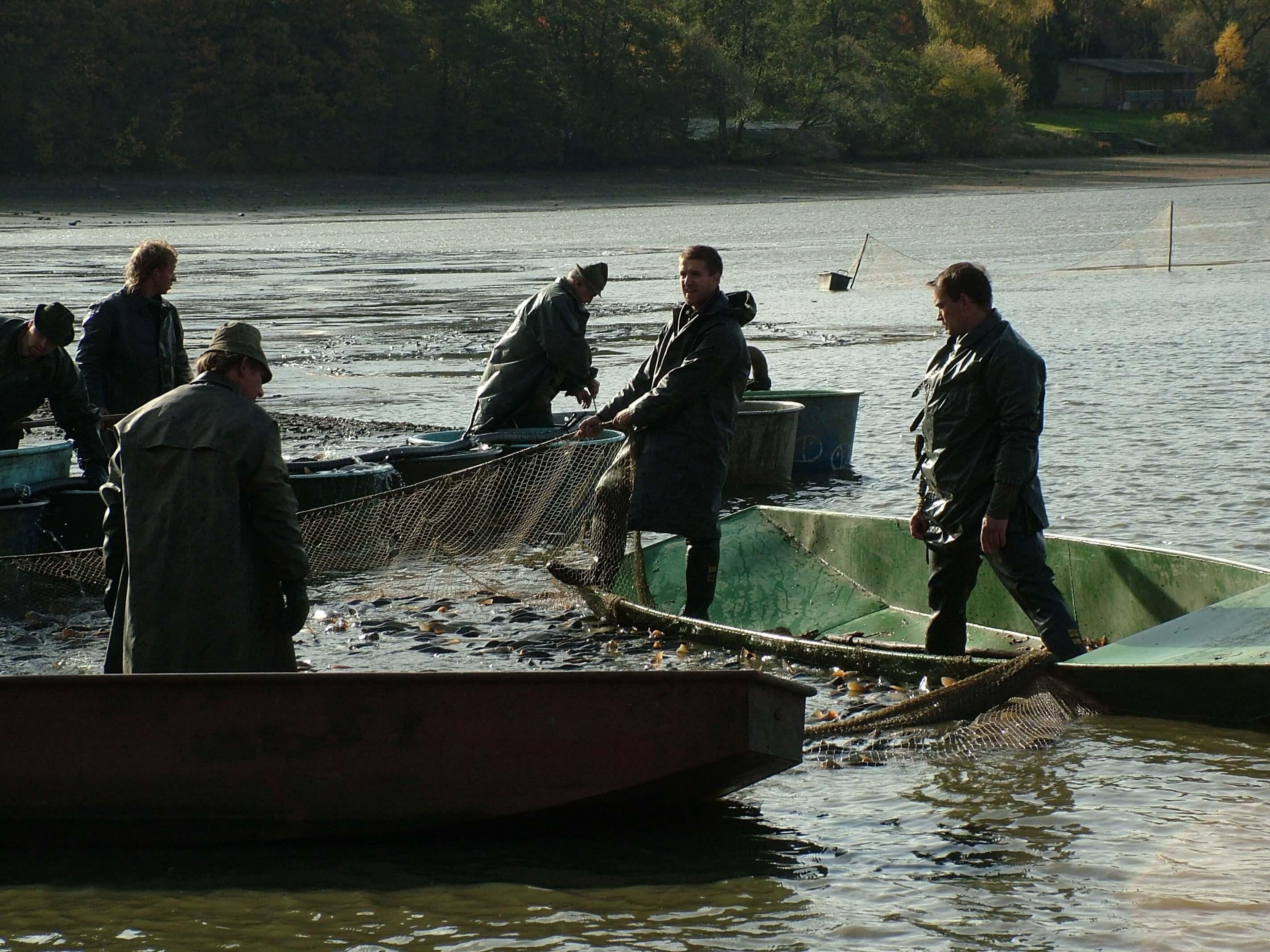 Chystá se výlov největšího českého rybníka